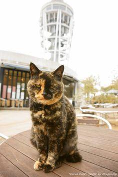 『看板猫のいる風景12-寝仔店長の大あくびとドヤ顔-』 http://amba.to/HyGwYc #neko #photocat #cat #petweet #猫部 #LocalCat  (via TrueDragonfly)