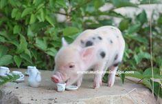 Chloe a 1 week old teacup piglet enjoying her tea.
