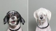 Soggy dog! Photog captures pooches during bath time