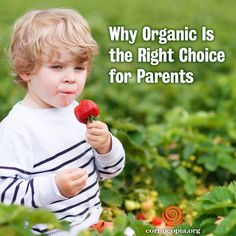 Go back to school with Organic food! More here…