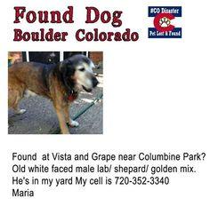 Found #Dog Senior Male Lab/ Shepherd / Golden Mix #Boulder http://boulder.craigslist.org/laf/4075098060.html