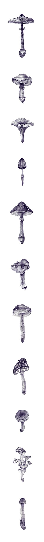 mushrooms ~