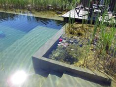 BioNova™ Natural Swimming Pools (NSPs) are chemical-free, sustainable, and healthful for the environment. The Pool Reinvented - Plants Instead of Chemicals™ Natural Swimming Ponds, Natural Pond, Swimming Pools Backyard, Swimming Pool Designs, Pool Landscaping, Lap Pools, Indoor Pools, Pool Decks, Small Backyard Pools