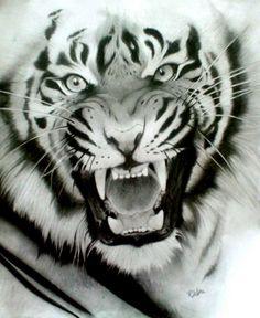 Hier haben wir ein schönes Bild von einem Tiger.