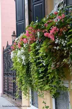 Window box beauty Charleston, SC