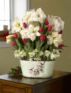 Deluxe Christmas Morning Blooms: Amaryllis, Tulips & Star of Bethlehem