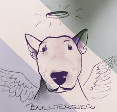 Bullterrier drawing