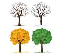 Lenagold - Clipart - Trees 7 Family Room Walls, Clip Art, Herbs, Seasons, Image, Google Search, Kitchen, Cooking, Seasons Of The Year