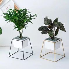 Rectangle Succulent Planter with Metal Gold Stand, Small Modern Planter,white Rectangle Ceramic Pot, House Plants Decor, Plant Decor, Iron Furniture, Garden Furniture, Decoration Plante, Indoor Plant Pots, Diy Plant Stand, Modern Planters, Flower Stands