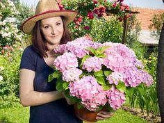 Hortensja w doniczce Clematis, Blond, Floral Wreath, Wreaths, Women, Floral Crown, Door Wreaths, Deco Mesh Wreaths, Floral Arrangements
