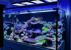 Saltwater Aquarium - Find incredible deals on Saltwater Aquarium and Saltwater Aquarium accessories. Let us show you how to save money on Saltwater Aquarium NOW! Coral Reef Aquarium, Aquarium Setup, Aquarium Design, Marine Aquarium, Saltwater Tank, Saltwater Aquarium, Aquarium Fish, Reef Aquascaping, Fish Tank Design