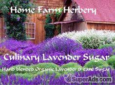 Culinary Organic Lavender Sugar, Order now, FREE shipping in San Francisco CA - Free San Francisco SuperAds