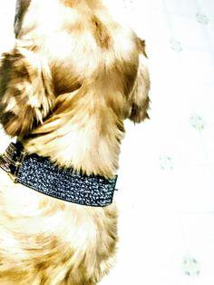 @xoxopeacebypiecexoxo Designer Dog Collars, Dog Design, Dogs, Animals, Animales, Animaux, Pet Dogs, Doggies, Animal