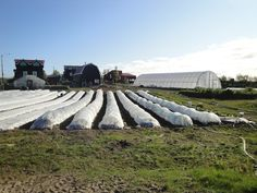 Atop Permafrost, Remote Alaska Farm Sustainably Produces Pristine Food.  No excuses not to grow food!!