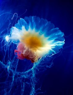 I wish I were a jellyfish. Floating along, without a care in the world, making beautiful art nonstop.