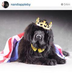 Nandi Appleby - Halloween