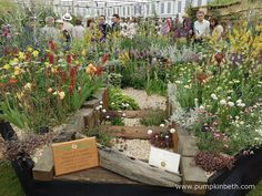 Daisy Roots Nursery Wins Gold at Chelsea! Buy Plants, Drought Tolerant Plants, Garden Show, Chelsea Flower Show, Colour Combinations, Great British, Great Places, Different Colors, Roots