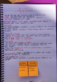 Resumo de Biologia : Anfíbios Creative Notebooks, Study Organization, Pretty Notes, School Notes, Studyblr, Student Life, Study Tips, School Supplies, Biology