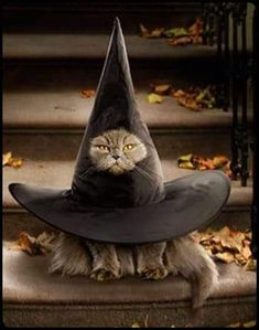 Cute Cat Costumes, Celebrity Halloween Costumes, Pet Halloween Costumes, Halloween Fashion, Pet Costumes, Halloween Cat, Happy Halloween, Halloween Outfits, Baby Scarecrow Costume