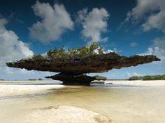 "Coral ""trees"", Aldabra Atoll, Seychelles (UNESCO World Heritage Site)"