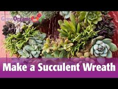 How to Make a Succulent Wreath - YouTube
