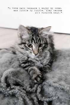 minni the cat