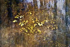 Yuri Santin - Abstract forest