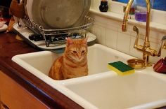 What is with cats loving to lounge in sinks? Seriously, someone answer this for me.