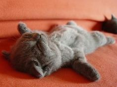 exhausted!