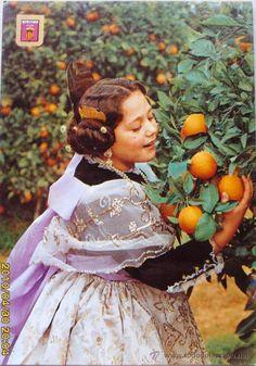 Naranjos en Valencia  Spain