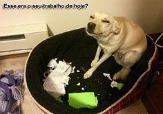 """""""O GRITO DO BICHO"""": Imagens do dia #ogritodobicho#falabicho"""