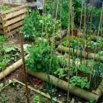 Winter is peeking around the corner. Here are 10 tips to prepare your garden for winter. Raised Vegetable Gardens, Raised Garden Beds, Raised Beds, Raised Gardens, Veg Garden, Vegetable Gardening, Organic Gardening, Gardening Tips, Urban Gardening