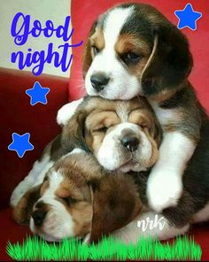 Good night my friend sweet dreams and God bless! Lovely Good Night, Good Night Gif, Night Love, Good Night Sweet Dreams, Good Night Image, Day For Night, Good Night Greetings, Good Night Messages, Good Night Wishes