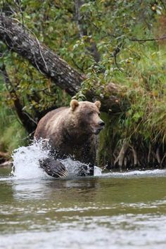 This August, L.L.Bean employee Dan T. spent nine days fly fishing with friends in Alaska's Togiak National Wildlife Refuge. They didn't see another person for the entire trip – but they most definitely saw a grizzly bear.