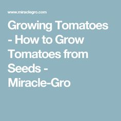 Growing Tomatoes - How to Grow Tomatoes from Seeds - Miracle-Gro