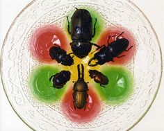 Insect Jelly Conference by Yumiko Utsu - Contemporary Japanese Art Collection by Jean Pigozzi