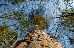 perspektive baum+himmel   Flickr - Photo Sharing! Photography Photos, Explore, Photos, Perspective Photography, Heavens, Tree Structure, Plants, Exploring