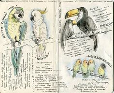 Sketchbook process/notes | birds by waiale
