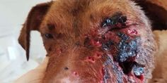 petizione: Demand that stray animals in Greece are protected from cruelty by the locals
