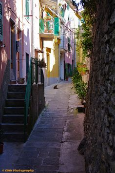 Narrow street in Porto Venere, Liguria, Italy (by chrissw22).