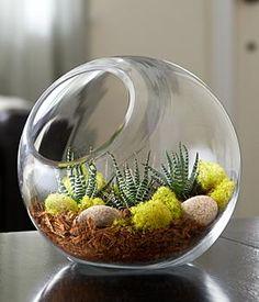 Modern Succulent Terrarium Kit