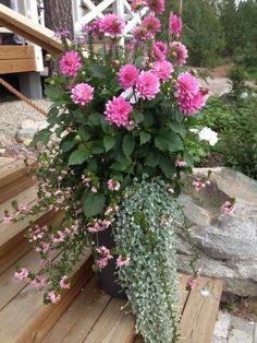Ideaa ensi kesän istutuksiin @Asuntomessut pic.twitter.com/GKoqa9sEc8 Container Flowers, Container Gardening, Orchids, Blogging, Wordpress, Twitter, Tree Fern, Vases, Ferns