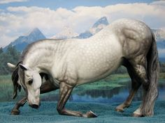 """Resin bowing stallion """"Vincenzo"""" by Eberl. Painted in dapple gray by Sommer Prosser."""