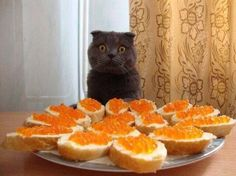 TOP 35 Cats and Kittens Pictures   Funny Animals, Funny Cat   DomPict.com