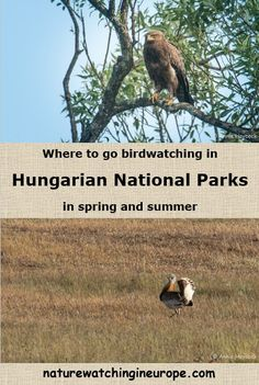 Birdwatching in Hungary in Spring-Summer – Nature-watching in Europe