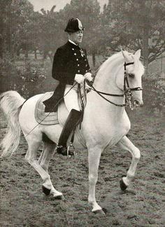First Rider Ernst Lindenbauer riding the legendary Lipizzan stallion 'Conversano Bonavista'. in the Piaffe
