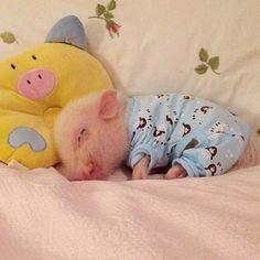 Cute pig ❤