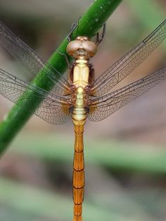 Dragonfly by Orange Leaf