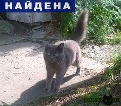 Найдена кошка ждет хозяина г.Ханты-Мансийск http://poiskzoo.ru/board/read25756.html  POISKZOO.RU/25756 Брошенная кошка каждый день ждет хозяина у дома, с которого выехали люди! По улице Гагарина возле остановки Лермонтова стоит дом под снос, с которого выехали люди и каждый день у калитки в дом сидит кошка и присматривается к людям. Она бежит за любым, кто обратит на неё внимание, с надеждой, что её не оставят. Очень ласковая кошечка и красивая. Может кто-то откликнется и сможет взять её?…