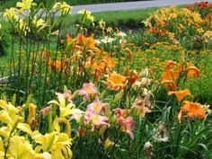 Day Lilies  So lovely in a garden, and lovely on a plate. You can stuff the flowers like squash blossoms or sprinkle the petals in a salad. The flavor of day lilies ranges from asparagus-like to zucchini-ish, with more sweetness. Just make sure they are day lilies, many lily varieties are not edible.